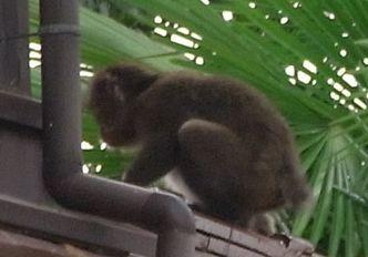 090903猿